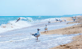 Dentist selecting his items. equipment. Gulls flying on the beach. Ocean waves and yellow sand stock photos