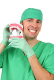 Dentist showing a big reproduction model of teet. H on white background stock photography