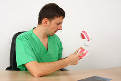 Dentist showing a big reproduction model of teeth Royalty Free Stock Image
