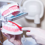 Dentist showing how to brush teeth in dentist's surgery. Stock Images