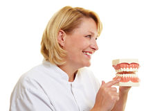 Dentist showing teeth model Stock Photos