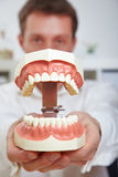 Dentist showing teeth model Stock Images