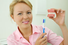 Dentist shows how to correctly brush teeth Royalty Free Stock Photography