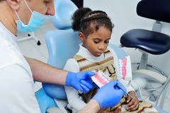Dentist shows the layout of child tooth jaw Royalty Free Stock Image