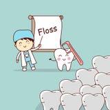 Dentist teach teeth use floss Stock Photos