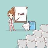 Dentist teach teeth use floss. Cartoon doctor or dentist teach teeth to use floss, great for dental care concept Stock Photography