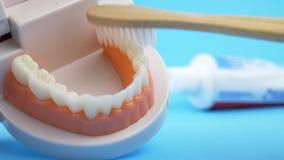 Dentist Teaching How to Brush Teeth
