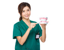 Dentist use of denture Royalty Free Stock Image