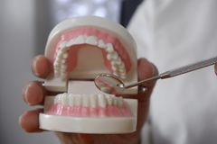 Dentist using tools on teeth model in dental office/ professional dental clinic, dental and medical concept royalty free stock images