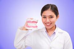 Dentist woman holding dental model Stock Photography