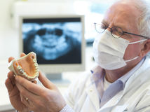Dentist with xray in hand. Senior dentist looking at xray image of tooth Stock Photography