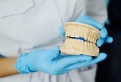 Dentista com um modelo das maxilas Imagem de Stock