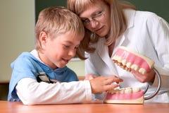 Dentista con la quijada de los dientes de la muestra del dentista Fotos de archivo libres de regalías