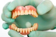 Dentista con los prostheises dentales Foto de archivo libre de regalías