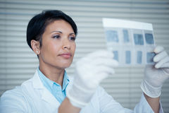 Dentista de sexo femenino que mira la radiografía Fotos de archivo