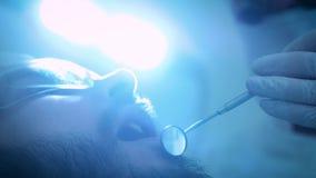 Dentista en el trabajo en la oficina Un doctor de sexo femenino examina los dientes y los mandíbulas de un paciente masculino almacen de video