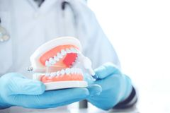 Dentista que aprende como escovar os dentes fotos de stock royalty free