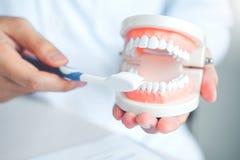 Dentista que aprende como escovar os dentes foto de stock royalty free