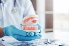 Dentista que aprende como escovar os dentes imagem de stock royalty free