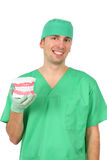 Dentista que mostra um modelo grande da reprodução dos dentes Imagens de Stock Royalty Free