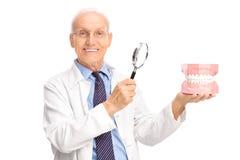 Dentista que sostiene la dentadura y una lupa Foto de archivo libre de regalías