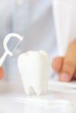 Dentista que sostiene la seda dental con la muela fotos de archivo