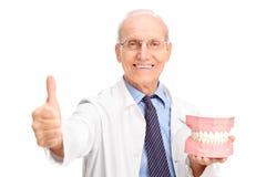 Dentista que sostiene una dentadura grande y que da el pulgar para arriba Imagen de archivo libre de regalías