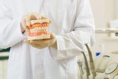 Dentista in sua chirurgia, tiene una protesi dentaria immagine stock