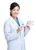 Dentiste avec la brosse à dents et mâchoire pour la démonstration image libre de droits