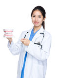 Dentiste avec la grande mâchoire image libre de droits