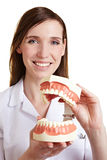 Dentiste avec le modèle des dents humaines Image libre de droits