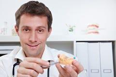 Dentiste avec le moulage dentaire photographie stock libre de droits