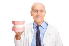 Dentiste mûr dans un manteau blanc tenant un dentier photos stock