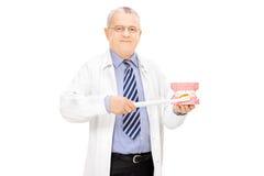 Dentiste masculin jugeant un échantillon de dents fabriqué à partir de la fonte de plâtre et photographie stock