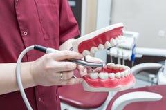 Dentiste tenant la mâchoire en plastique image stock