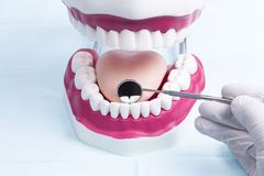 Dentistry. Image shows a dental jaw model with hand and tools royalty free stock photos