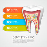 Dentistry info medical art Stock Photos