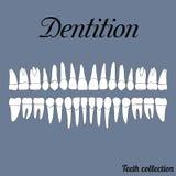 dentition illustration de vecteur