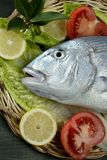 Denton, Mediterranean sparus, gilthead, snapper Royalty Free Stock Photos