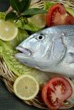 Denton, Mediterranean sparus, gilthead, snapper royalty free stock photos