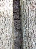 Dentro da árvore oca imagens de stock royalty free