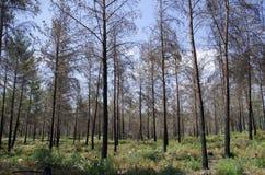 Dentro da floresta Imagem de Stock Royalty Free