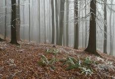 Dentro da floresta Imagens de Stock Royalty Free