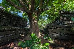 Dentro da peça central de Nan Madol Nandauwas: as paredes, e o fosso fizeram de fotos de stock royalty free