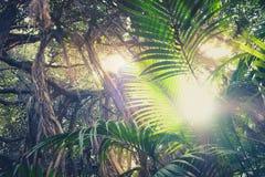 Dentro de la selva tropical, mirando para arriba los árboles en selva imagen de archivo libre de regalías