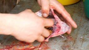 Dentro de los pescados mucho caviar y entrañas Las manos masculinas del pescador cortaron el vientre de un pescado de agua dulce  metrajes