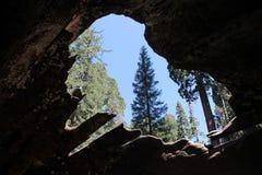 Dentro de uma árvore caída fotos de stock royalty free