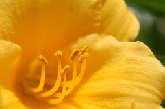 Dentro de uma flor Fotografia de Stock Royalty Free
