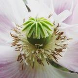 Dentro de uma flor bonita Imagens de Stock Royalty Free