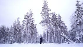 Dentro de uma floresta congelada de lapland fotos de stock